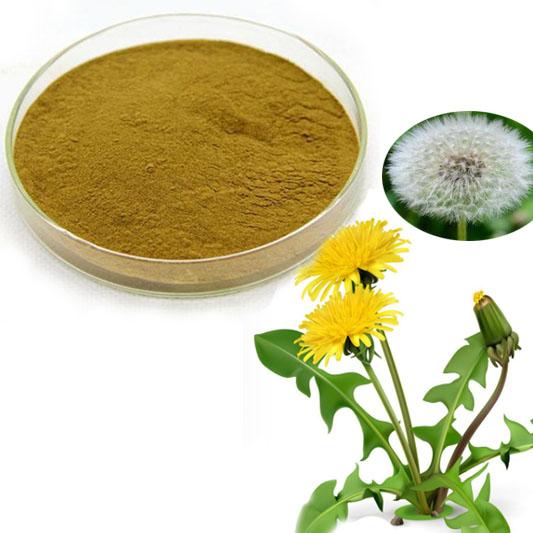 Dandelion extract Flavonoids
