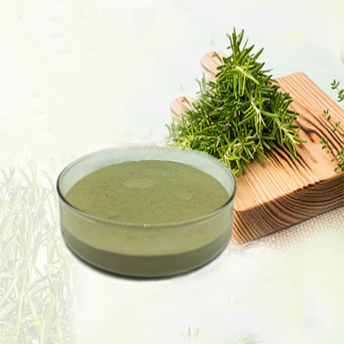 Rosemary extract Ursolic Acid
