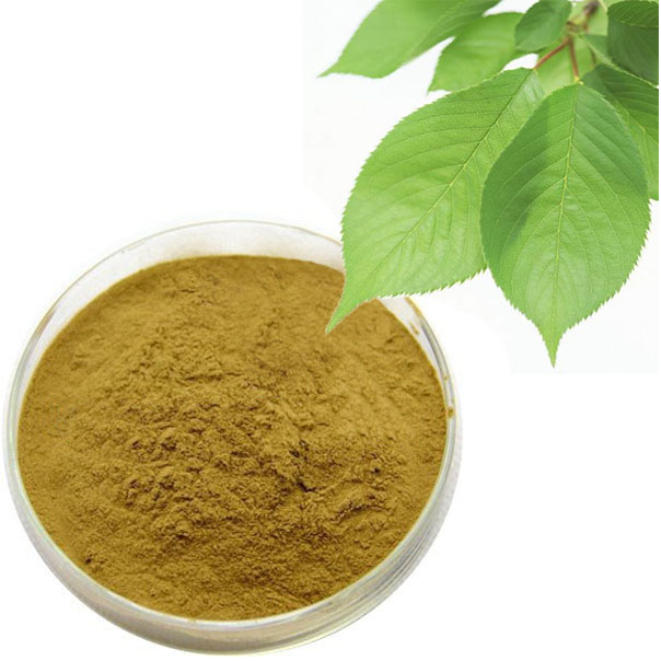 Mulberry leaf extract 1-DNJ,Polysaccharides