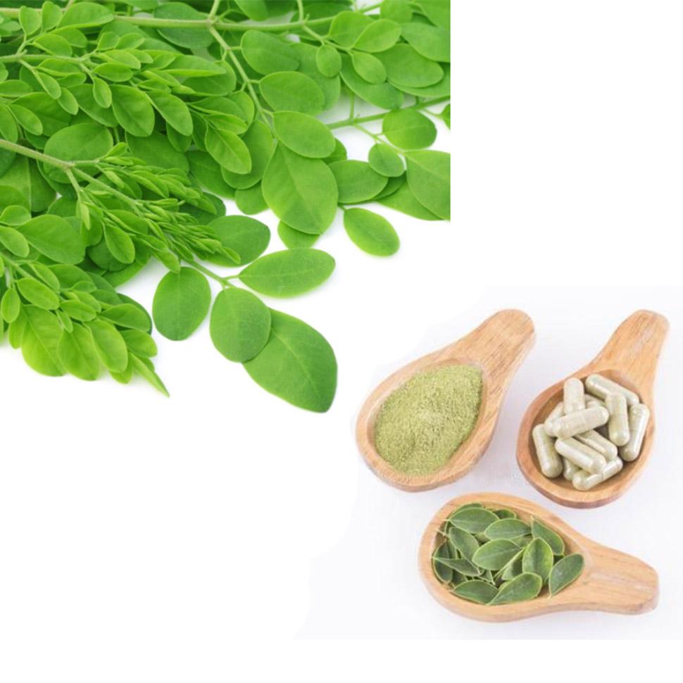Moringa Oleifera Leaf Extract Polysaccharides