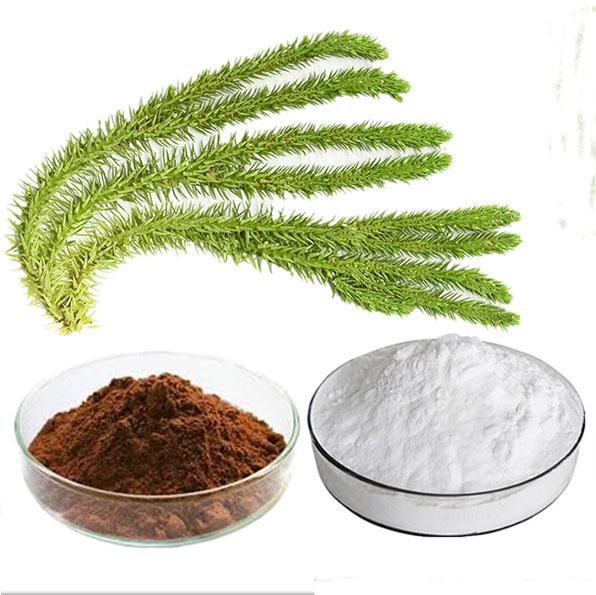 Huperzia serrata Extract Huperzine A