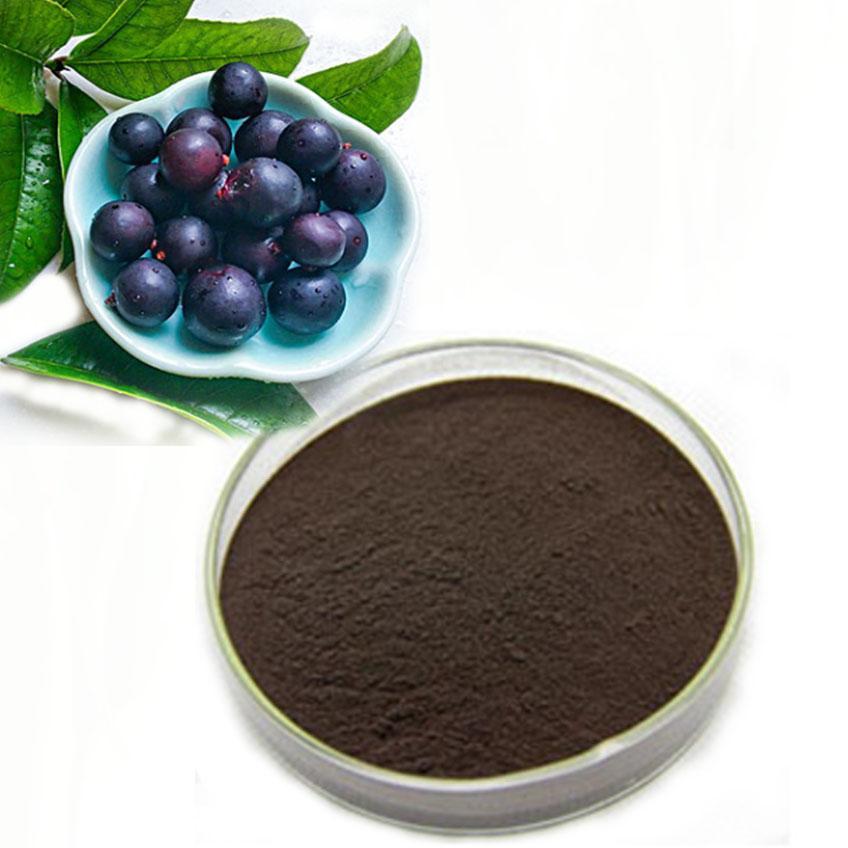Blackcurrant Extract anthocyanosides